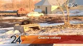 В Нижнекамске неизвестные посадили на цепь собаку в поле