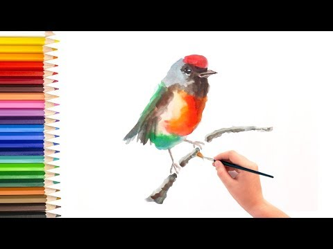 Simple Steps To Learn How To Draw And Paint Bird Using Watercolor, Basic Watercolor 水彩画基础教程 如何用水彩画鸟