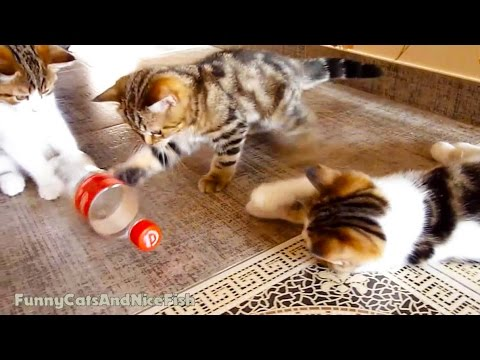 Cute Kittens Playing BottleBall