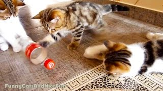 Cute Kittens Playing BottleBall