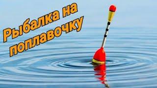 Рыбалка на поплавок! Что лучше донка или джиг? Рыбалка на донку! Рыбалка 2020!