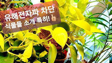전자파 차단 탁월한식물 소개(실험결과)실내공기정화식물😘Air purification plant