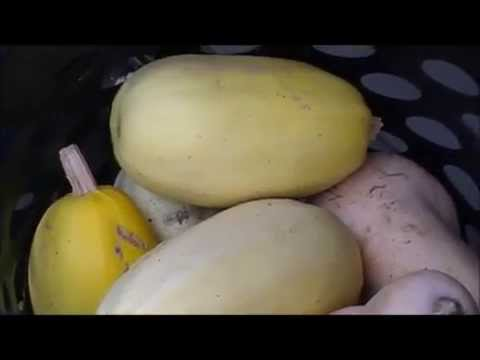 Harvesting, Curing, & Storing Winter Squash ~ Homesteading Ways