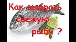 Как выбрать свежую рыбу пеленгас