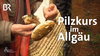 Steinpilz oder Gallenrhrling Pilzkurs im Allgu  Schwaben  Altbayern  BR