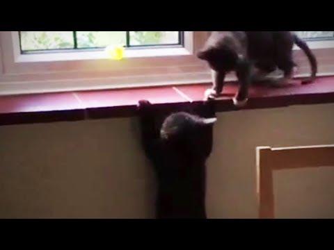 Funny Cat Fails 😂 😻 Epic Cat Fails (Part 2) [Epic Life]