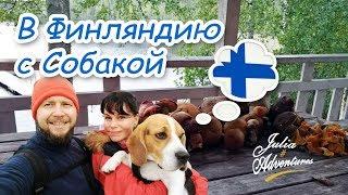 В Финляндию с собакой (часть 1) - Как вывезти собаку за границу на машине