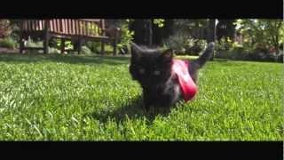 Симпатичные котята летаю в замедленном движении (RePlay)