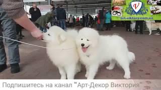 Выставка собак Одесса. Март 2018. Обзор. Сегодня в Одессе. Животные. Собаки чемпионы. Ривьера. КСУ.
