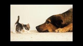 Собачки, видящие маленьких котят в первый раз. Сборник NEW