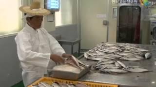 [식품가공 관련] - 고등어간잽이 직업소개 동영상