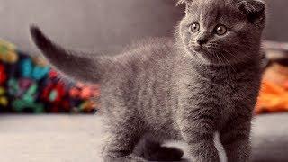 утро маленького котенка