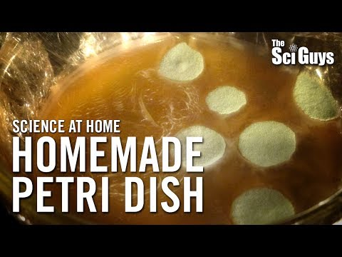 The Sci Guys: Science at Home - SE2 - EP3: Homemade Petri Dish - Growing Bacteria at Home