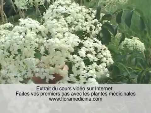 Racine D Astragale : Code promo - Plantes - Danger |  Quels sont les bienfaits ?