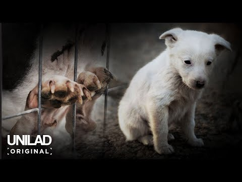 The Dark Side of Britain: Puppy Farms | UNILAD Original Documentary