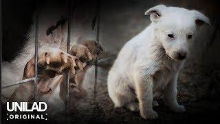 The Dark Side of Britain: Puppy Farms   UNILAD Original Documentary