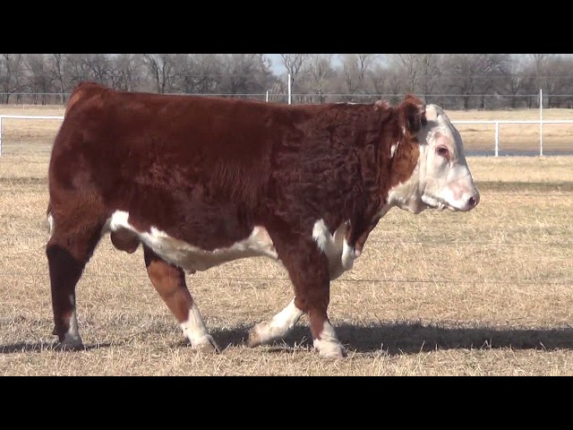 Express Ranches Lot 201