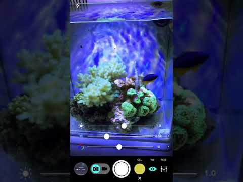 Aquarium Camera App for iPhone, iPad and Android