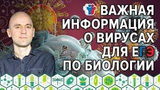 20. Важная информация о вирусах для ЕГЭ по биологии