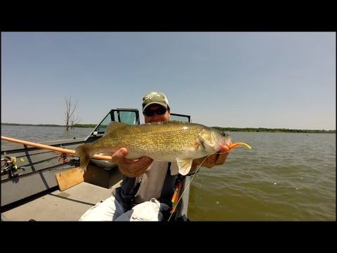 Missouri timber walleye youtube for Walleye fishing in missouri