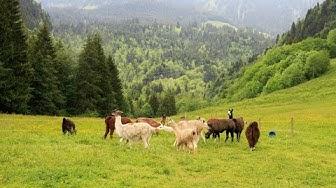 Schweiz (Entlebuch) - Das Biosphärenreservat