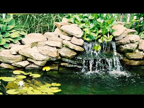 Sounds by the Pond