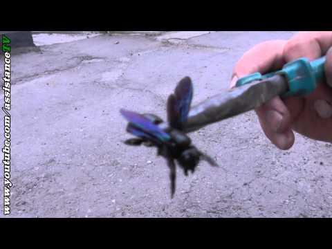 Этот жук ест древесину и крышу дома