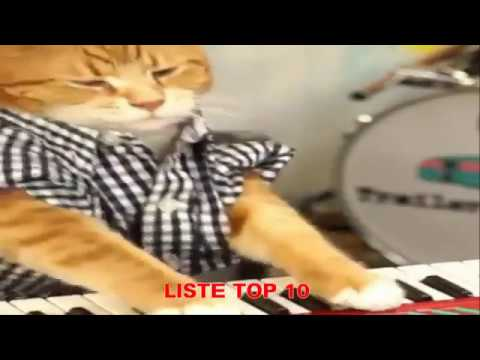 listetop10 lustige tiere zum totlachen 26 lustige katzen videos zum totlachen youtube
