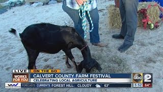 Calvert County Farm Festival has fun events for the whole family