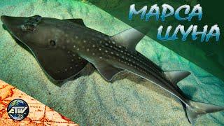 Марса Шуна Рыба гитара бородавчатка осьминоги Очень красивый риф Марса Алам Египет 2021