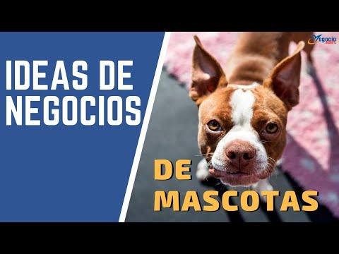15 ideas de negocios innovadores y rentables en el sector mascotas