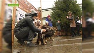 В Красноярске школьники делают паспорта для бездомных собак