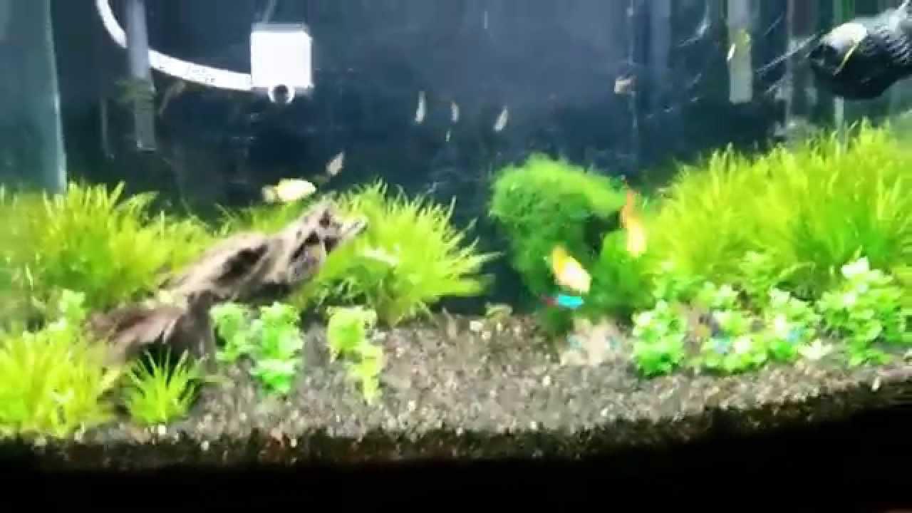 Simple aquascape - YouTube