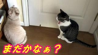 お母ちゃんは大阪に日帰り出張です。こむぎ&だいずがクロゼットに入り...
