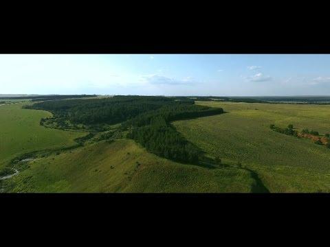 G.T & V.E - tree (Republic of Udmurtia, Kama river)