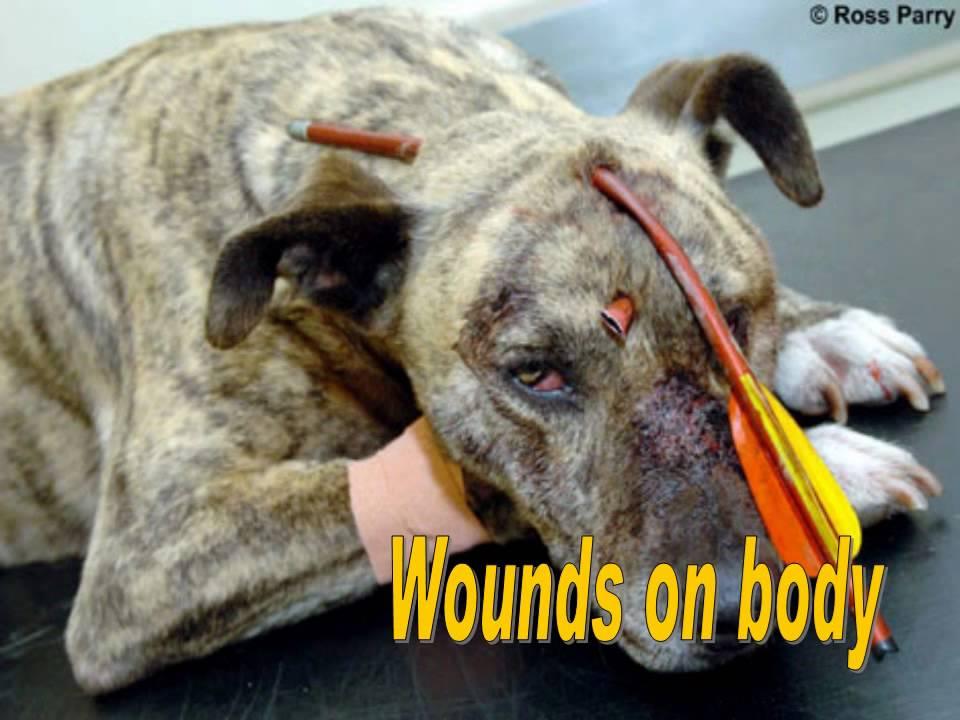 Image result for dog abuse