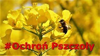 """Pszczoły Nie Uznają Świąt - Pracują Dla Ciebie - Nie Rób Im Krzywdy! """"Udostępnij"""""""