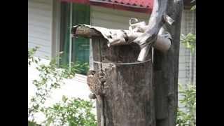 Жизнь птиц скворечник