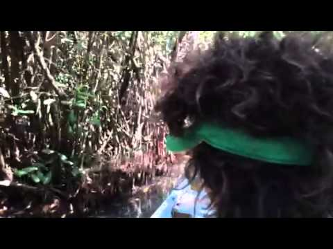 Sounds and sights in the Mangrove swamp
