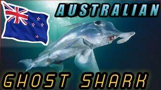 Australian ghost shark    ऑस्ट्रेलिया की भूतिया घोस्ट शार्क