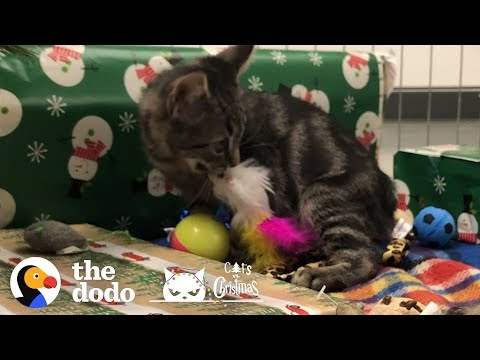 Shelter Kitten Gets All The Christmas Presents | The Dodo