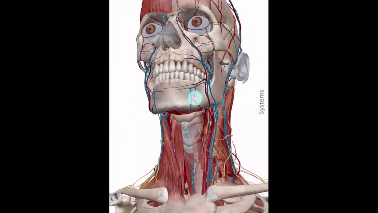 Human Anatomy Atlas 2017 Edition for iPhone & Android Phone - Overview