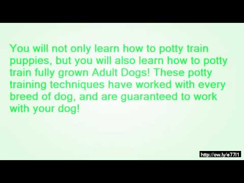 How to train your dog not to pee and poop in the house for How to train your dog to pee