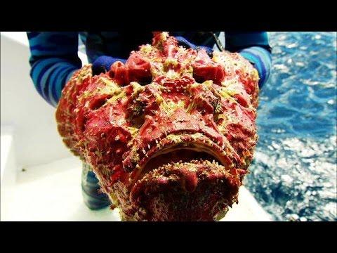 World's Most Poisonous Fish