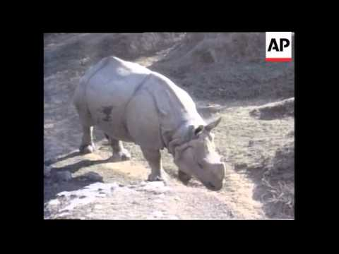 (V) INDIA: RHINOS MAYBE SAVED BY THE INVENTION OF VIAGRA