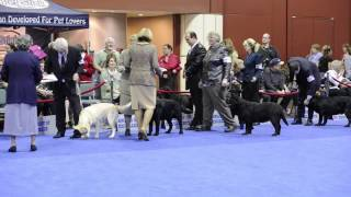 Labrador Retrievers - And The Winner Is?