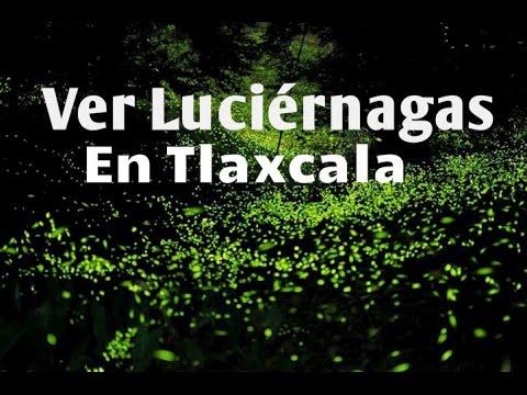 Como ir santuario de las luci rnagas en nanacamilpa Espectaculo de luciernagas en tlaxcala
