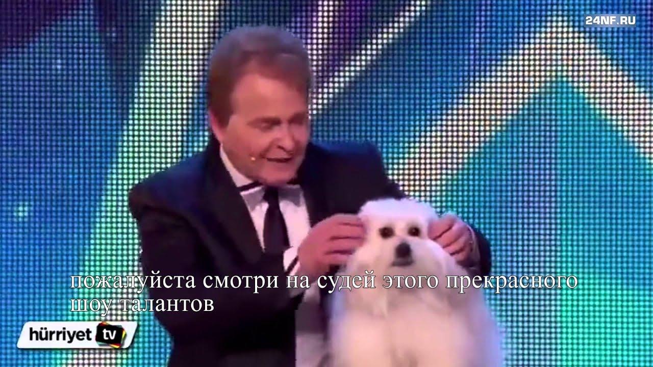 Говорящая собака на шоу талантов в Британии