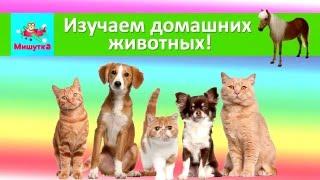 Изучаем домашних животных  Развивающий мультфильм для детей. Звуки животных