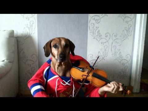 Christmas songs Jingle bells Funny dog play violin
